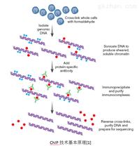 染色质免疫共沉淀技术