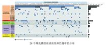 全基因组重测序技术(WGS)
