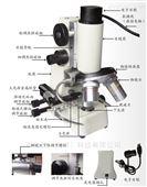 便携式显微镜 型号:H7-BX-A